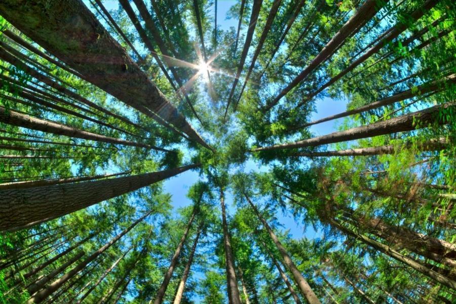 nachhaltigkeit-kluthe