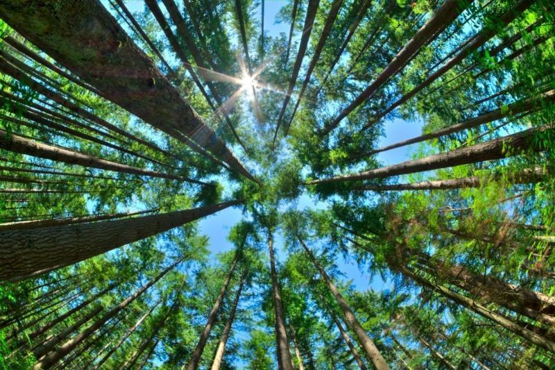 nachhaltigkeit-kluthe-co2-einsparen-oberflaechentechnik