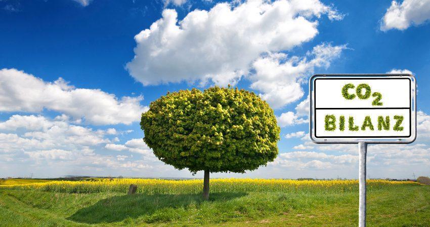 Symbolbild sauberer Baum - Scope 1,2 und 3 Emissionen